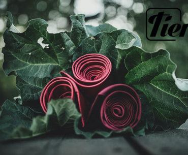Tieroom: the element of elegance